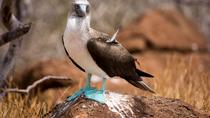 Day Trip to North Seymour Island from Puerto Ayora, Galapagos Islands, Day Trips