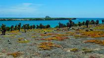 Day Trip to South Plaza Island from Puerto Ayora, Galapagos Islands, Day Trips