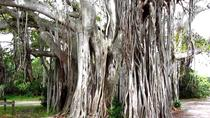 1-Hour Bike Tour of Hugh Taylor Birch State Park, Fort Lauderdale, Segway Tours
