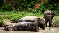 A Morning with the Elephants Sanctuary, Phuket, 4WD, ATV & Off-Road Tours