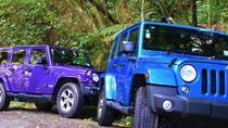 4-Hour Bay of Islands Private Jeep Forest Tour, Bay of Islands, Ports of Call Tours