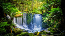 Mt Field National Park and Bonorong Wildlife Sanctuary Small-Group Day Tour, Hobart, Attraction ...