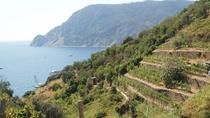 1.5-Hour Cinque Terre Wine Tour in Manarola, チンクエテッレ