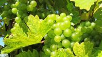1.5-Hour Cinque Terre Wine Tour in Manarola
