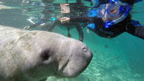 Swim with Manatee Adventure!, Crystal River, Snorkeling