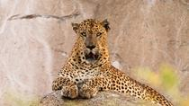 Watch Leopard, Elephant, Sloth Bear and Blue Whale in the Wild, Colombo, Multi-day Tours
