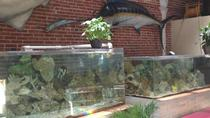 90 Minute Morning Tour of World Aquarium in Saint Louis, St Louis, Attraction Tickets