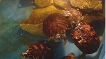 General Admission to World Aquarium in Saint Louis