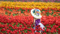 Tesselaar Tulip Festival: General Entry Ticket, Yarra Valley, Attraction Tickets