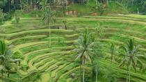 Ubud tour with private car and tour driver, Kuta, Private Sightseeing Tours