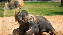 Houston Zoo Admission Ticket, Houston, Attraction Tickets