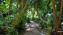 Roatan Nature Eco Walk Butterfly Garden Tour and Carambola Garden And Beach, Roatan, Ports of Call ...