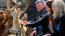 African Cat Encounter at Werribee Open Range Zoo, Victoria, Zoo Tickets & Passes