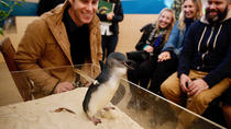 Little Penguin Experience at Melbourne Zoo, Melbourne, Zoo Tickets & Passes