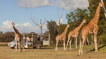 Off-Road Safari at Werribee Open Range Zoo, Victoria, Zoo Tickets & Passes