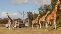 Safari fuoristrada presso lo zoo all'aperto Werribee, Melbourne, Zoo Tickets & Passes