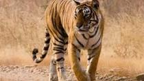 Day Trip to Ranthambore, Jaipur, Day Trips
