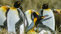 King Penguin & Tierra del Fuego Tour, Punta Arenas, Cultural Tours