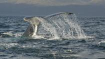 Whale-Watching Day Trip from Punta Arenas, Punta Arenas