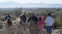 Scottsdale Hike & Dine - Guided hike with brunch or dinner included, Phoenix, Hiking & Camping