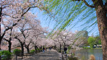Tokyo Cherry Blossom Walking Tour in Asakusa, Tokyo, Dinner Packages