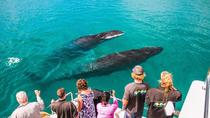 Humpback Whale Sunset Cruise, Exmouth, Sunset Cruises