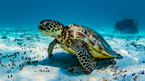 Ningaloo Reef Turtle and Reef Adventure Tour, Exmouth, 4WD, ATV & Off-Road Tours