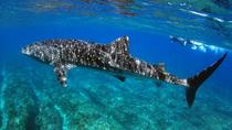 Whale Shark Discovery Tour, Exmouth, Day Cruises