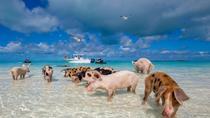 Bimini Bahamas Day Trip from Miami, Miami, Day Trips