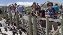 Full day Combo, Cape Point and Winelands Tour, Cape Town, Cultural Tours