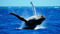 Whales & Wine Tour (Hermanus), Cape Town, Wine Tasting & Winery Tours