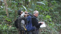 Birdwatching at Caminho do Ouro (Gold Way), Paraty, 4WD, ATV & Off-Road Tours