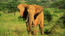 4 DAYS AMBOSELI ,TSAVO WEST, EAST AND SHIMBA HILLS SAFARI, Nairobi, Multi-day Tours