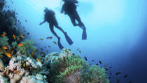 Lanzarote Scuba Diving Experience for Beginners, Lanzarote, Scuba Diving