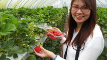 Strawberry Farm Tour from Seoul, Seoul, Food Tours