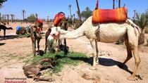 Marrakech quad and Camel experience in Agafay Desert, Marrakech, Nature & Wildlife