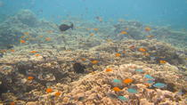 Discover Scuba Diving in Amed, Bali, Scuba Diving