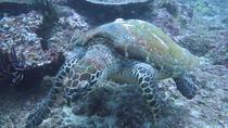 Scuba Diving in Padangbai, Bali, Scuba Diving