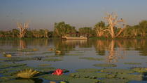 Corroboree Billabong Wetland Cruise, Northern Territory, Day Cruises