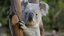 Featherdale Wildlife Park General Entry Ticket, Sydney, Attraction Tickets
