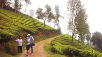 TEAWALK & SAFARI (PRIVATE COACH TOUR), Jakarta, Day Trips