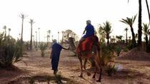 Camel ride in Marrakech palm grove, Marrakech, Nature & Wildlife