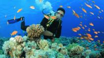 SCUBA DIVING TOUR, Antalya, Scuba Diving