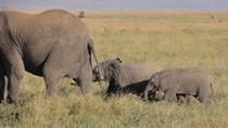14 Days Kenya,Tanzania and Zanzibar Beach holidays, Arusha, Multi-day Tours