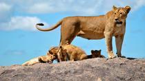 5 Days Tanzania Big 5 Safaris, Arusha, Private Sightseeing Tours