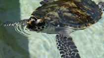 Turtle Encounter Day Cruise to Beachcomber Island, Denarau Island, Day Cruises
