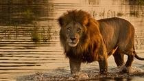 2 Day Tour to Galle & Ridiyagama Safari Park From Colombo, Colombo, Multi-day Tours