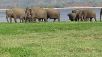 Day Excursions to Minneriya National Park From Colombo, Colombo, Nature & Wildlife