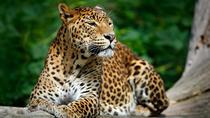 Day Excursions To Yala National Park Form Galle, Galle, Attraction Tickets