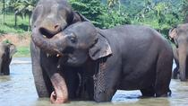 Private Day Tour To Kandy With Pinnawala Open Zoo From Waikkal, Negombo, Zoo Tickets & Passes